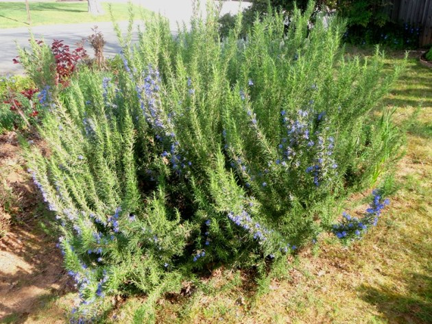 And outside, Rosemary