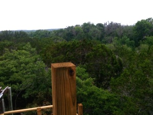 The view from the cabin porch
