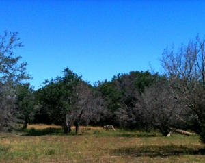 Yes, the Mexican grey wolf is back there somewhere