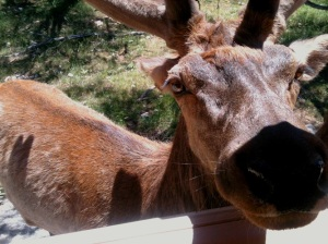 Fabio, the African deer, up close and personal