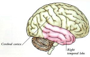 My temporal (lobe) reality