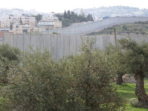 The view of olive trees and the Wall near Bethlehem